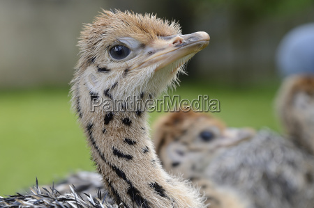 closeup animal bird fauna animals agriculture