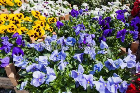 garten blume pflanze gewaechs flora botanik