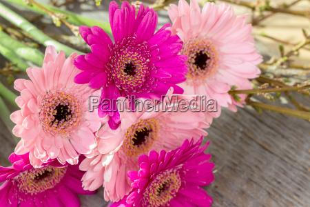 praesentere trae blomstre blomstrende blomsterpragt flowerage