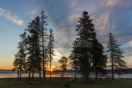 scenery with silhouettes of trees at