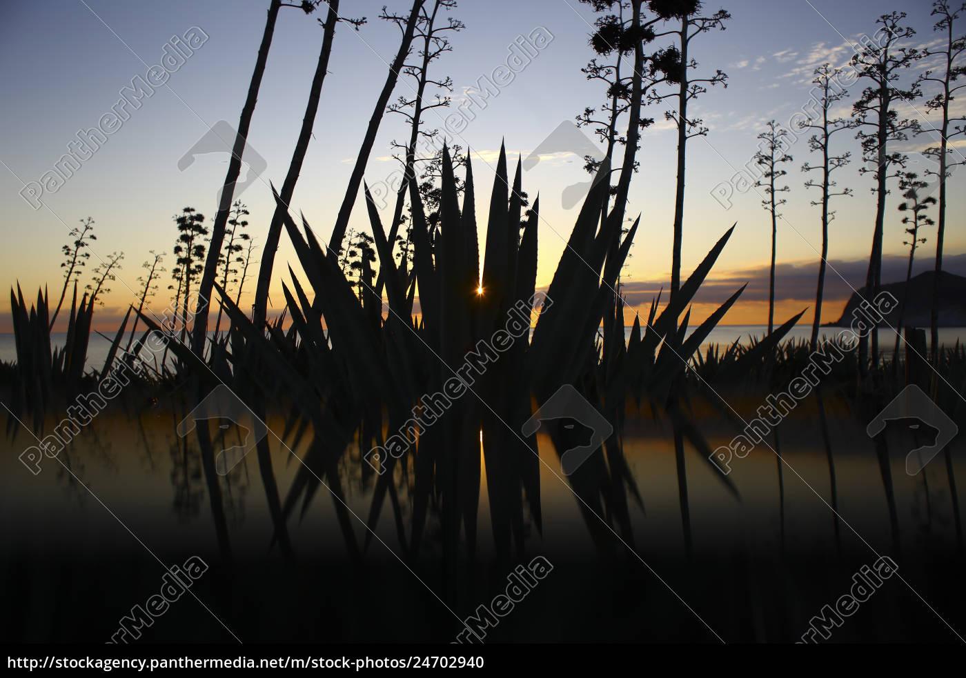 silhouetten, von, pflanzen, und, bäumen, der - 24702940