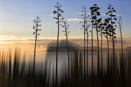 silhouetten, von, pflanzen, und, bäumen, die, an - 24702942