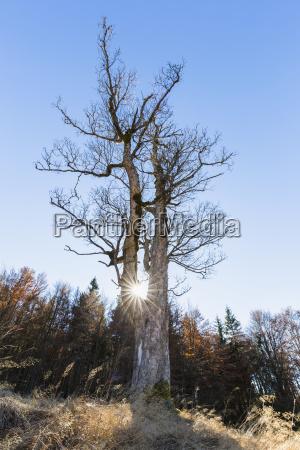 germany bavaria lower bavaria bavarian forest