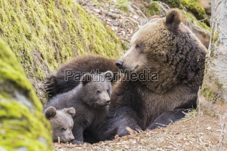 germany bavarian forest national park animal