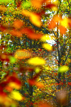 blatt baumblatt farbe baum blaetter bunt