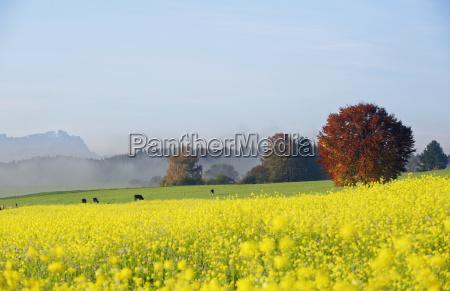 germany bavaria upper bavaria autumnal andscape