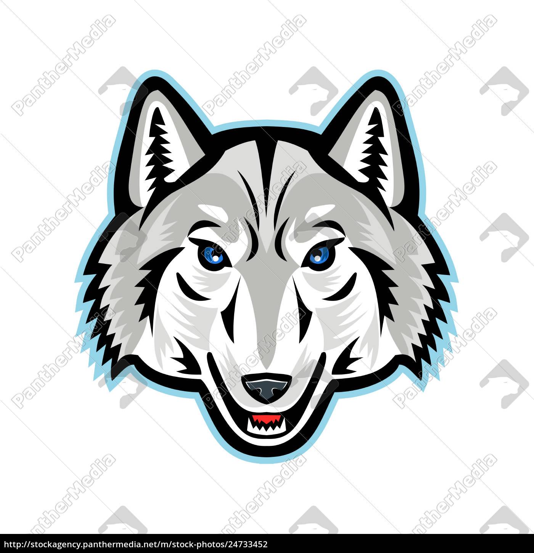 Lizenzfreies Foto 24733452 Artic Wolf Kopf Vorne Maskottchen