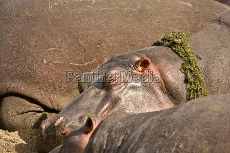 wild afrika schlaf schlafen schlaeft schlafend
