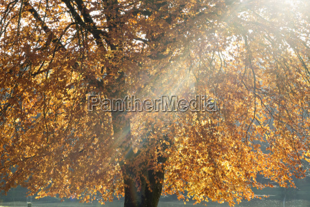 sunlight streaming through branches of tree