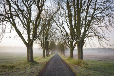 chestnut tree lined road on a