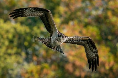 baum tier vogel fauna flora greifvogel