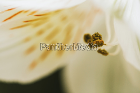 extreme close up of flower blooming