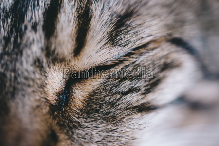 extreme close up of tabby cat