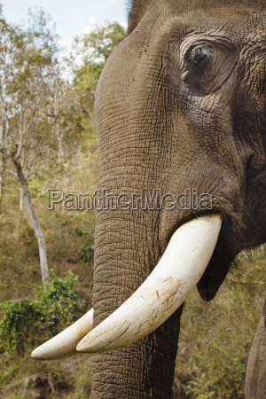 close up of elephant in nature