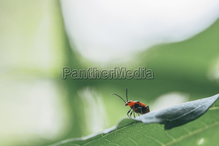 close up of insect on leaf