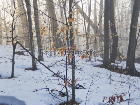 trees on snow covered field at