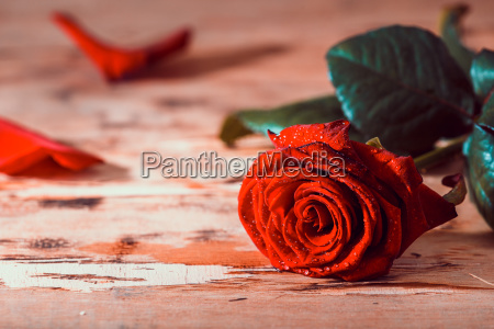 red roses on wooden background valentines