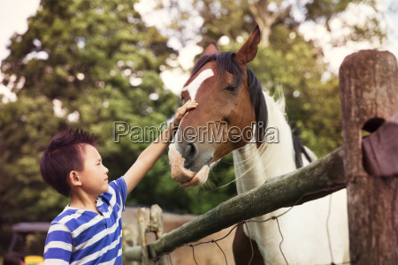 boy stroking horse while standing in