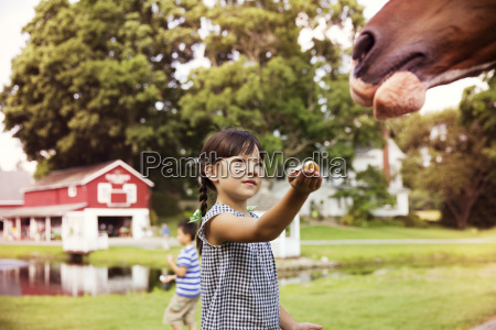 girl feeding horse while standing in