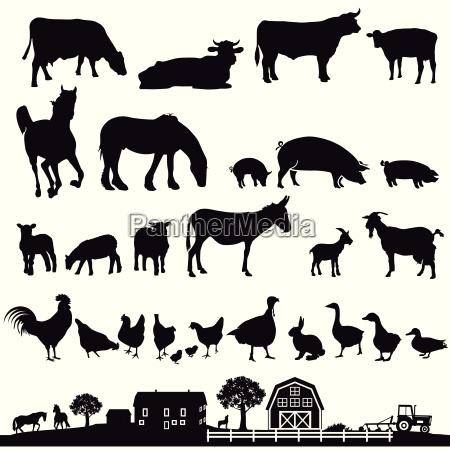 farm animals and farm illustration