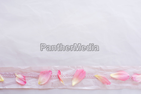rose petals decorated on pink background