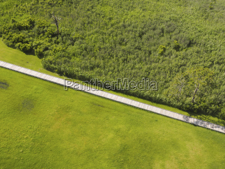 overhead view of boardwalk amidst green