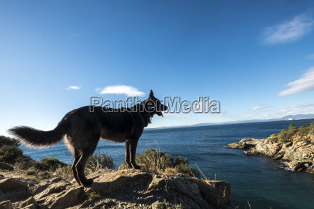 side view of dog standing on