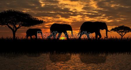 eine familie von elefanten auf einem