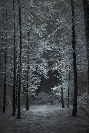 umwelt baum baeume winter nacht nachtzeit