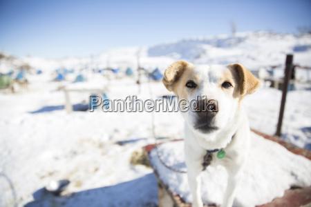 winter tier haustier saeugetier portrait portraet