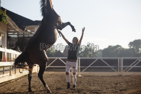 woman training horse while standing at