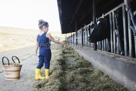 girl feeding grass to cow at