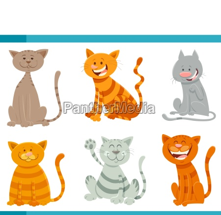 funny cats and kittens animal characters