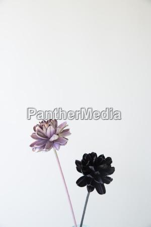 stilleben freisteller farbe blume blumen pflanze