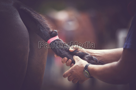 cropped hands of man tying horse