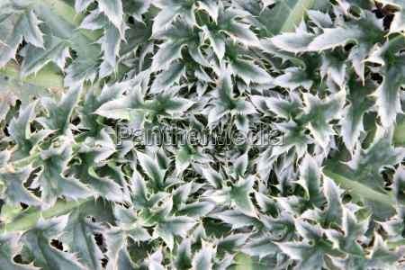leaves background top view macro floral