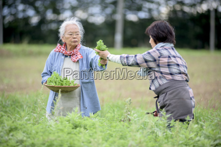 elderly woman with grey hair and