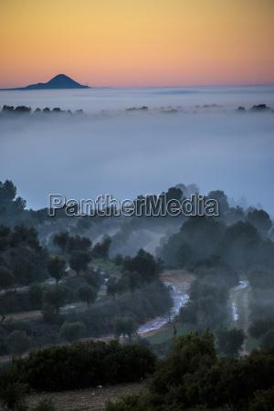 baum feldweg nebel spanien outdoor freiluft