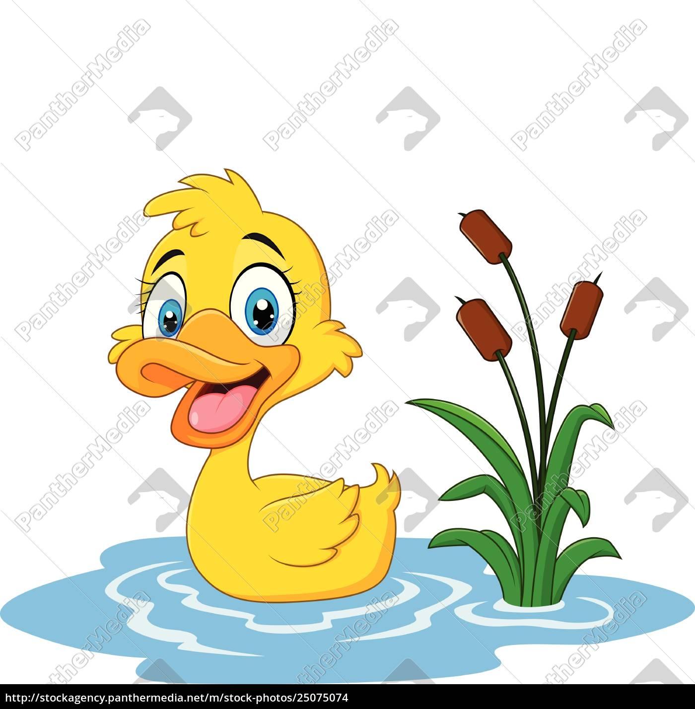 lustige ente der karikatur schwimmt auf wasser - stockfoto
