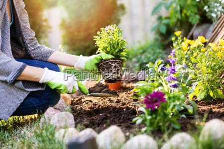 gaertner der blumen im gartenbett pflanzt