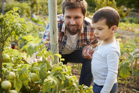 father and son looking at tomatoes