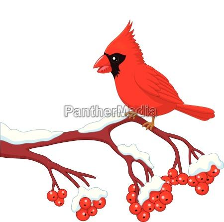schoener kardinaler vogel der karikatur der
