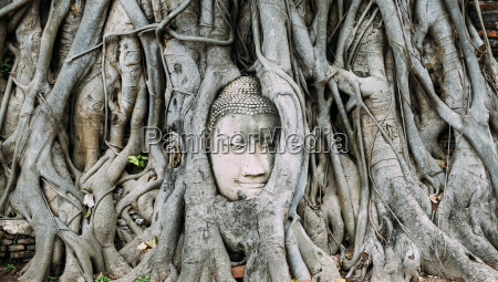 thailand ayutthaya buddha kopf zwischen baumwurzeln