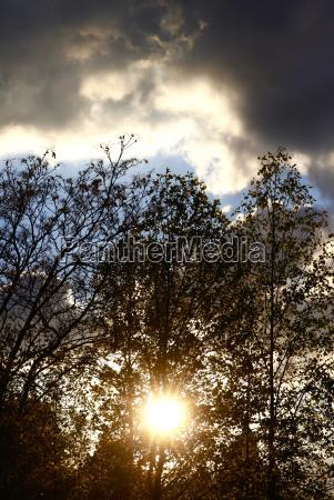 baum wolke laubbaum sonnenlicht herbstlich ast