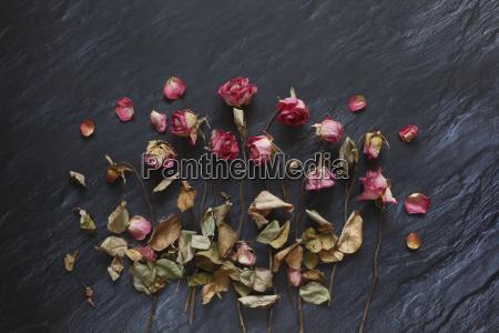 verderbte rosen auf schiefer