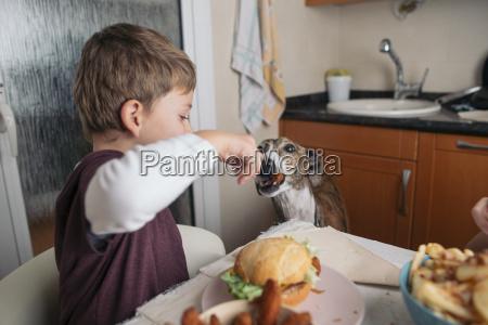 boy feeding dog at dining table
