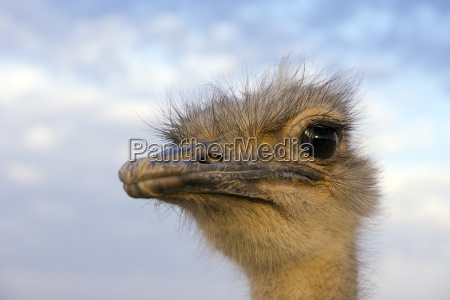 tier vogel neugier neugierde afrika landwirtschaft