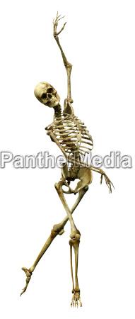 3d rendering human skeleton auf weiss