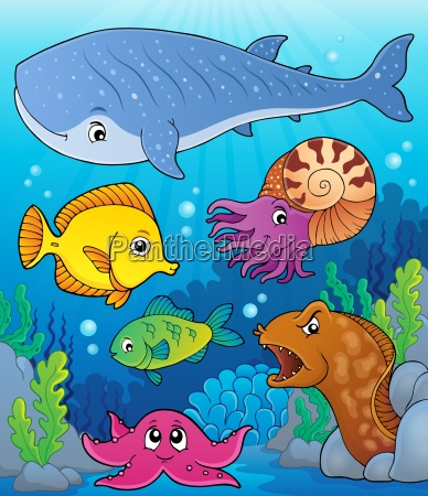 coral fauna topic image 4