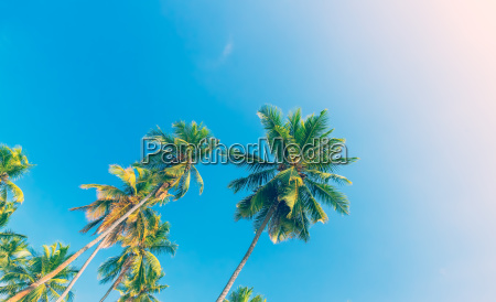 palm trees over blue sky background